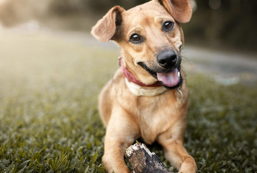 Best Flooring Options for Homes with Dogs